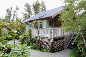 rainforest tree lodge 47